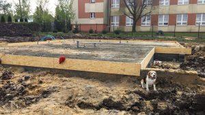 beagle obok płyty fundamentowej
